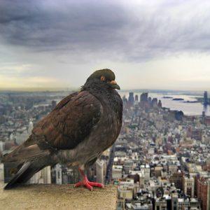 zaštita od ptica 1