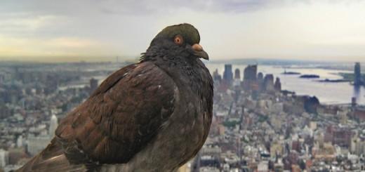 zastita od golubova 2
