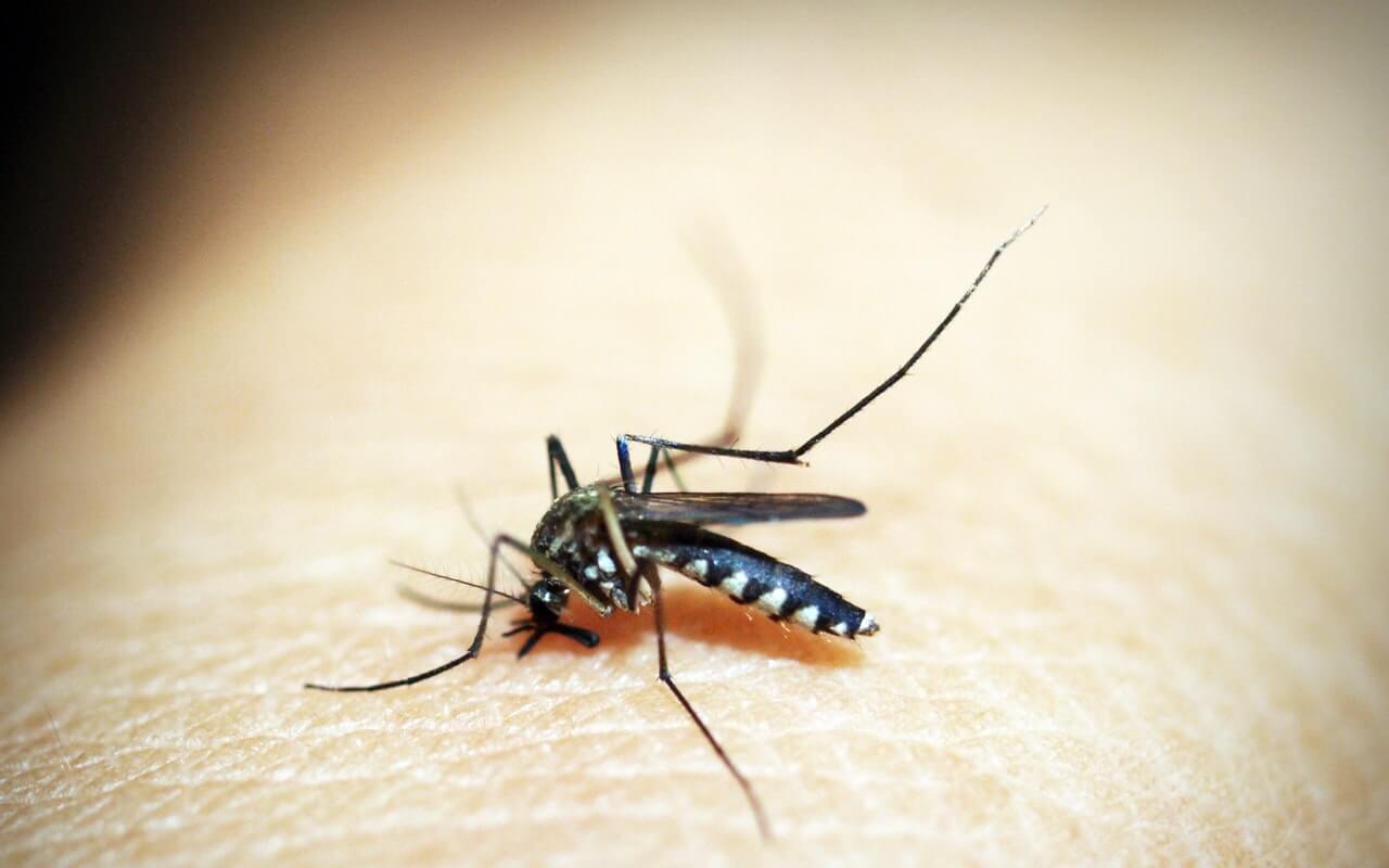 Komarac ujed malarije